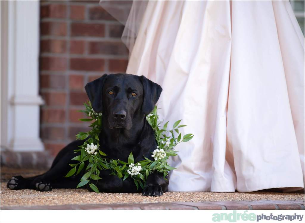 peyton-outdoors-oak-trees-black-lab-dog-bridal-session_0002 Peyton {Bridal Session}   Private Residence   Mobile, AL Bridal Wedding