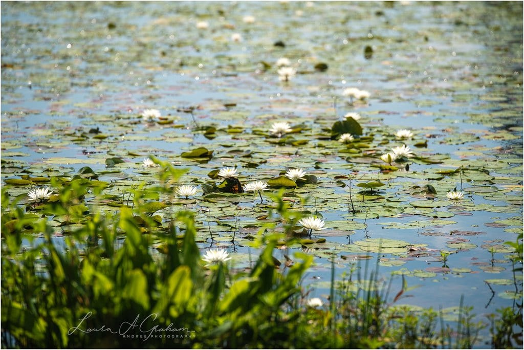 waterlilies-lake-paul-b-johnson-state-park-sunrise-fog_0011 Blooming Waterlilies | Traveling Landscape Photographer Adventure Editorial Personal